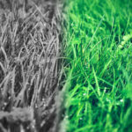 婚活中に隣の芝生が青く見える時