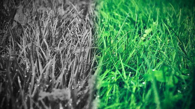 となりの芝が青く見えるのは、婚活あるある