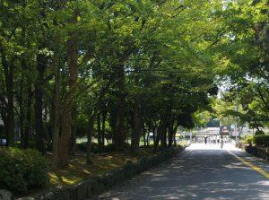 緑地公園の緑